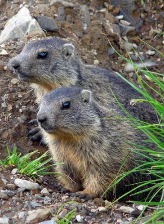 La montagne aux marmottes un parc animalier dans les for Parc animalier dans les yvelines